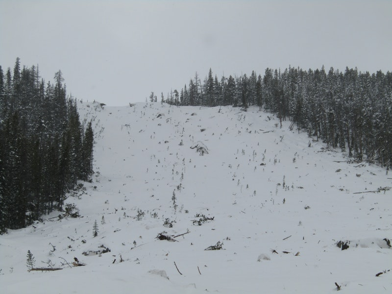 <b>Figure 3:</b> Part of the forest that this avalanche destroyed (<a href=javascript:void(0); onClick=win=window.open('https://caic-production.imgix.net/2frefr4ucqp8cehl9rtvc38v1hu1?ixlib=php-3.1.0&s=f5322128ce45d31ba29cdc19cf476b14','caic_media','resizable=1,height=820,width=840,scrollbars=yes');win.focus();return false;>see full sized image</a>)