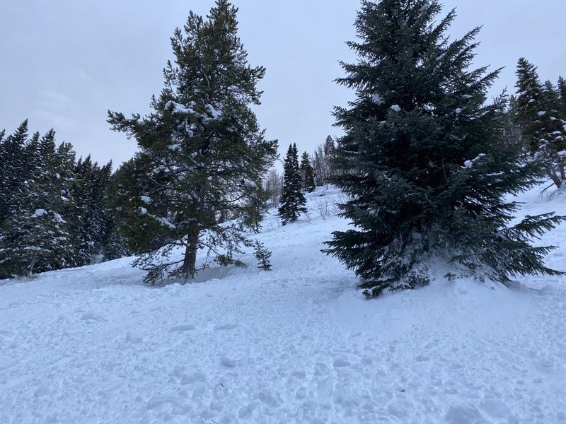 <b>Figure 5:</b> Looking up at the bed surface of the avalanche. Rider 1 was near the tree on the right before the avalanche released. Image courtesy of Hunter Schleper. (<a href=javascript:void(0); onClick=win=window.open('https://caic-production.imgix.net/2ql4gbgnjajrsebty8j99yv96ium?ixlib=php-3.1.0&s=7040dbd2dcaa6727c1011c6fe7bde521','caic_media','resizable=1,height=820,width=840,scrollbars=yes');win.focus();return false;>see full sized image</a>)
