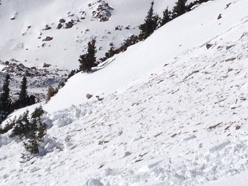 <b>Figure 5:</b> South flank of the slab. Skier 2 was pushed into the island of small trees, or 'Krumholtz', on the far left center of the photograph. (<a href=javascript:void(0); onClick=win=window.open('https://caic-production.imgix.net/38py1146c2cn19q9ydg1aritf5e1?ixlib=php-3.1.0&s=4d88a7177a491bf2b143402415f11a1b','caic_media','resizable=1,height=820,width=840,scrollbars=yes');win.focus();return false;>see full sized image</a>)