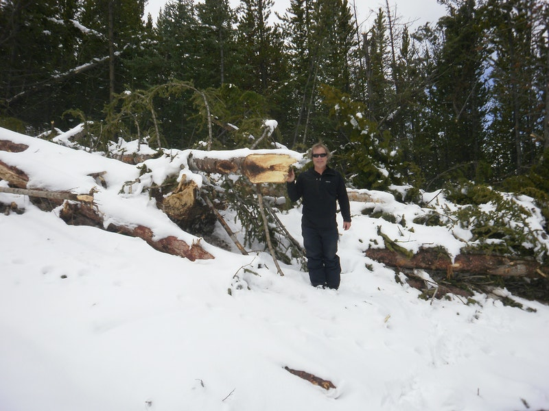 <b>Figure 4:</b> CAIC forecaster John Snook examines trees broken by the avalanche. (<a href=javascript:void(0); onClick=win=window.open('https://caic-production.imgix.net/3n6eg12h6g8omah4vxbpmkqwfoqp?ixlib=php-3.1.0&s=55a161aded8858b1a7c949eb087d6cc0','caic_media','resizable=1,height=820,width=840,scrollbars=yes');win.focus();return false;>see full sized image</a>)