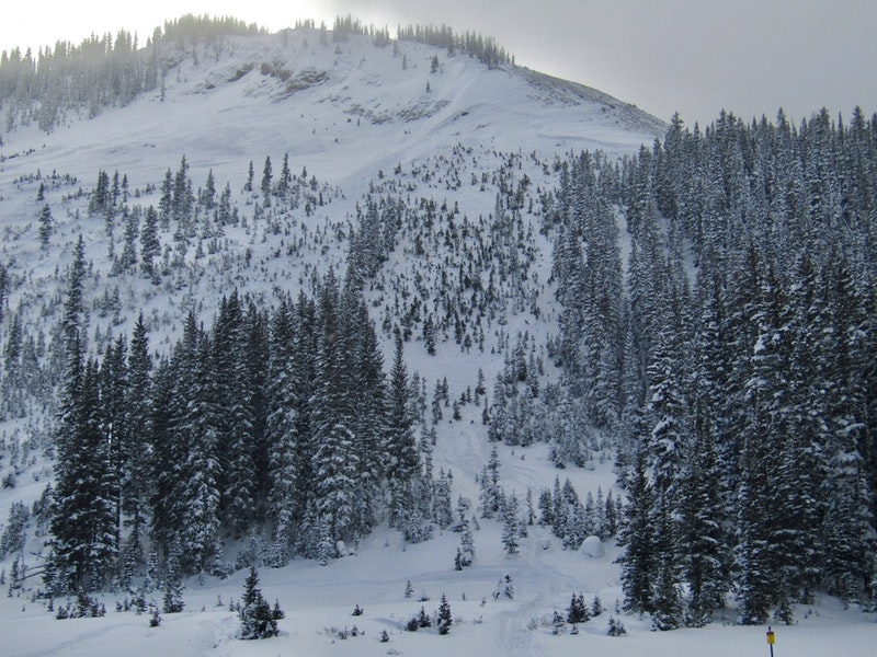 <b>Figure 3:</b> A view of the slope, with the avalanche crown in the upper right of the photos and the sparsely treed avalanche path in the foreground. (<a href=javascript:void(0); onClick=win=window.open('https://caic-production.imgix.net/4lu8dwzdoqec6kp2btz965m7gk5v?ixlib=php-3.1.0&s=f530025b824709ea18e50d36cda56f40','caic_media','resizable=1,height=820,width=840,scrollbars=yes');win.focus();return false;>see full sized image</a>)