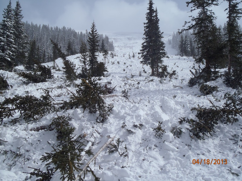 """<b>Figure 19:</b> The avalanche broke trees up to 6"""" in diameter. in the lower portion of its path. Image courtesy of Marcus Dreux (<a href=javascript:void(0); onClick=win=window.open('https://caic-production.imgix.net/5o147tic0diutrww22b8v2uhr4wq?ixlib=php-3.1.0&s=007d12ed5dc151ccc41d3d113ab21923','caic_media','resizable=1,height=820,width=840,scrollbars=yes');win.focus();return false;>see full sized image</a>)"""