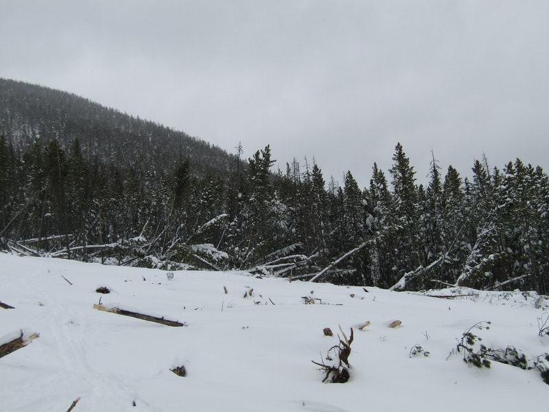<b>Figure 7:</b> Many trees were blown over by the force of this avalanche (<a href=javascript:void(0); onClick=win=window.open('https://caic-production.imgix.net/6tkxgvr1pfh7igs1pnpuouy6zgsc?ixlib=php-3.1.0&s=08f5550d2da536e16c57085fe7ce0d8f','caic_media','resizable=1,height=820,width=840,scrollbars=yes');win.focus();return false;>see full sized image</a>)
