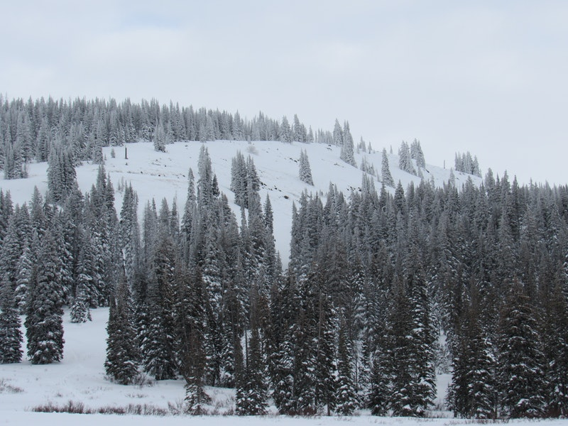 <b>Figure 2:</b> A look at a south-facing slope where an avalanche was triggered by snowmobilers. Much of the crown was filled back in by westerly winds cross-loading the slope. (<a href=javascript:void(0); onClick=win=window.open('https://caic-production.imgix.net/b5nc5ct591hkpte2tnjoyg54pvtg?ixlib=php-3.1.0&s=a56e5c5d8b751856225a1c77fd9f3b5d','caic_media','resizable=1,height=820,width=840,scrollbars=yes');win.focus();return false;>see full sized image</a>)