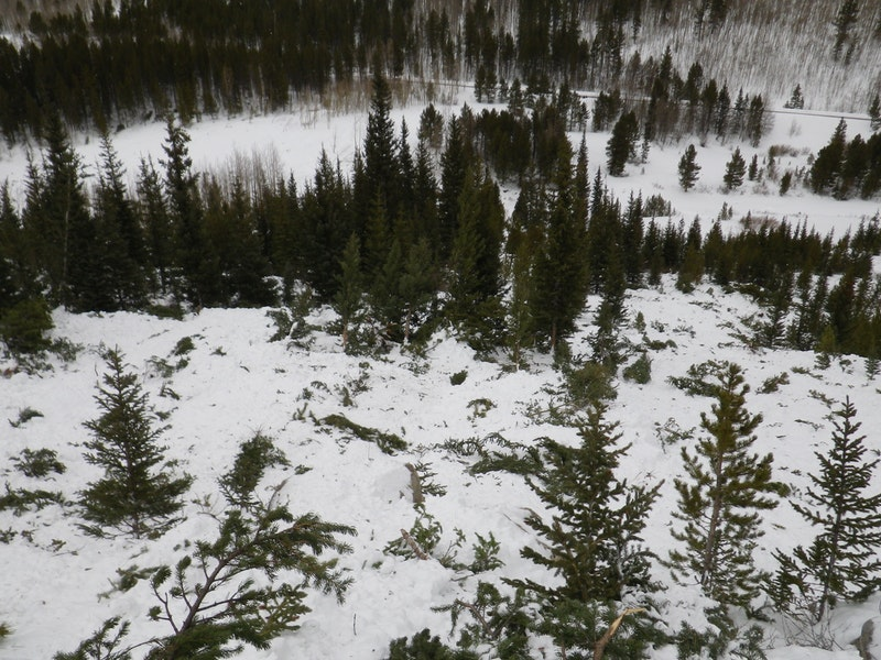 <b>Figure 18:</b> Trees damaged in the avalanche. (<a href=javascript:void(0); onClick=win=window.open('https://caic-production.imgix.net/cikulkh8l5d1nvkjocre28jde0e4?ixlib=php-3.1.0&s=0c5462f8ef899b24e6bd38246b0ca29a','caic_media','resizable=1,height=820,width=840,scrollbars=yes');win.focus();return false;>see full sized image</a>)