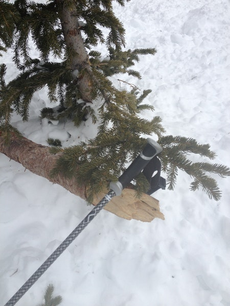 <b>Figure 4:</b> A tree broken in the avalanche. (<a href=javascript:void(0); onClick=win=window.open('https://caic-production.imgix.net/haacrf0m4q29dng73lype3hchb2e?ixlib=php-3.1.0&s=d6cdfa90fb2ac7759f6013a7d483da9f','caic_media','resizable=1,height=820,width=840,scrollbars=yes');win.focus();return false;>see full sized image</a>)