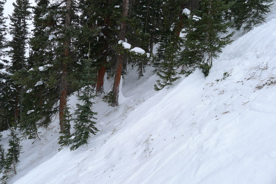 <b>Figure 10:</b> Timber the avalanche flowed through. The snow on the uphill side of the trees shows the approximate depth of the debris during the avalanche. (<a href=javascript:void(0); onClick=win=window.open('https://caic-production.imgix.net/l6vtfvv8fpzyoh1s0j644udbb5c4?ixlib=php-3.1.0&s=28f6f389373656ecdc459654cd04dc44','caic_media','resizable=1,height=820,width=840,scrollbars=yes');win.focus();return false;>see full sized image</a>)