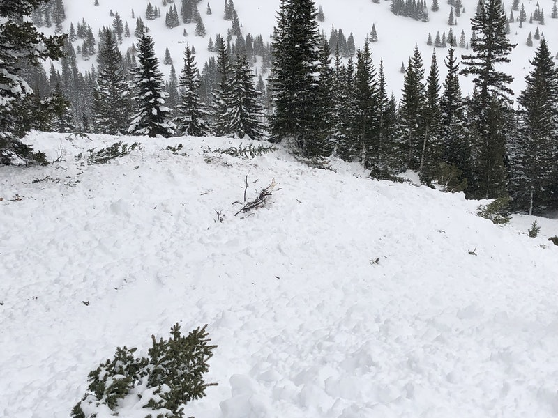 <b>Figure 12:</b> Broken trees in the avalanche path. (<a href=javascript:void(0); onClick=win=window.open('https://caic-production.imgix.net/m73r7hsdu96tc2pk8o6ezc7irgrw?ixlib=php-3.1.0&s=5ff89e9ea223d847881eb8b169e7ba60','caic_media','resizable=1,height=820,width=840,scrollbars=yes');win.focus();return false;>see full sized image</a>)