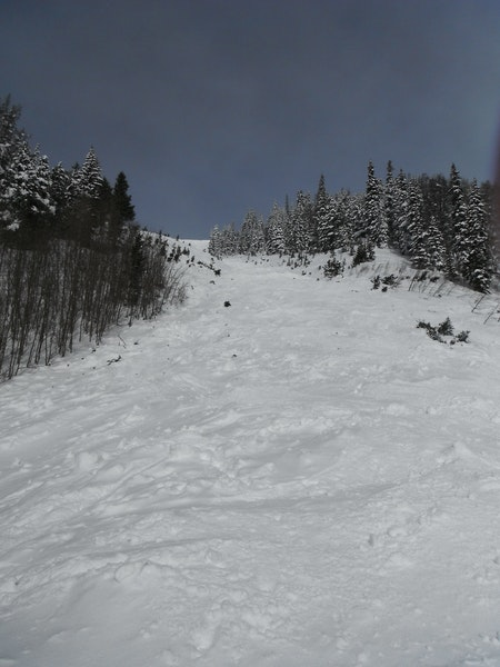 <b>Figure 2:</b> Looking up at the track of the avalanche path. (<a href=javascript:void(0); onClick=win=window.open('https://caic-production.imgix.net/tf52uyni160fvebowhlxxg72o6bj?ixlib=php-3.1.0&s=fa2861fb36543a63193f7236959e4d23','caic_media','resizable=1,height=820,width=840,scrollbars=yes');win.focus();return false;>see full sized image</a>)