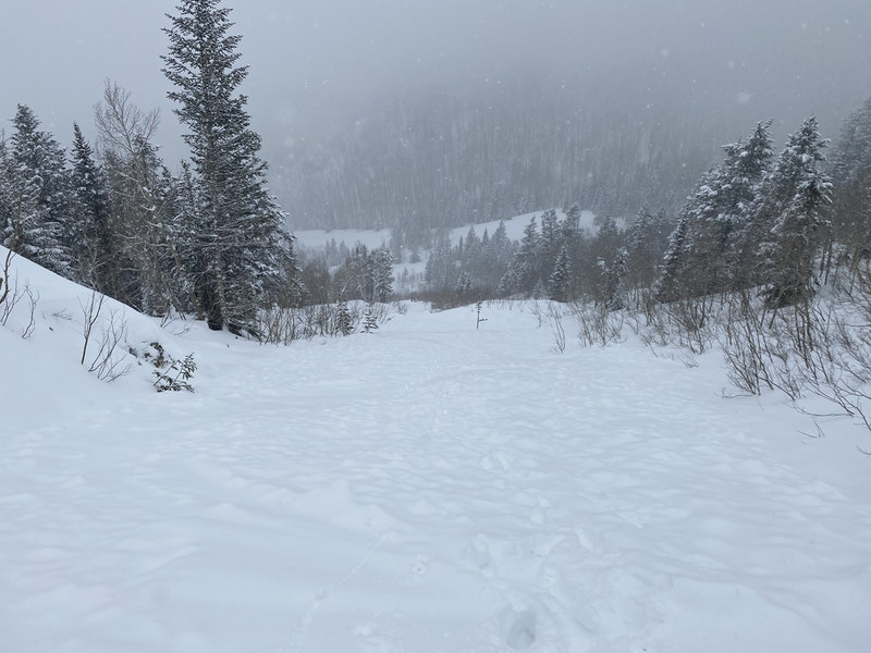 <b>Figure 8:</b> Looking down the avalanche path from just below the cliff band. (<a href=javascript:void(0); onClick=win=window.open('https://caic-production.imgix.net/ujt3arp7eeidht8l9hv3jr3qmal7?ixlib=php-3.1.0&s=4ebccc03e8ea2aec0ac2cc74379bb451','caic_media','resizable=1,height=820,width=840,scrollbars=yes');win.focus();return false;>see full sized image</a>)