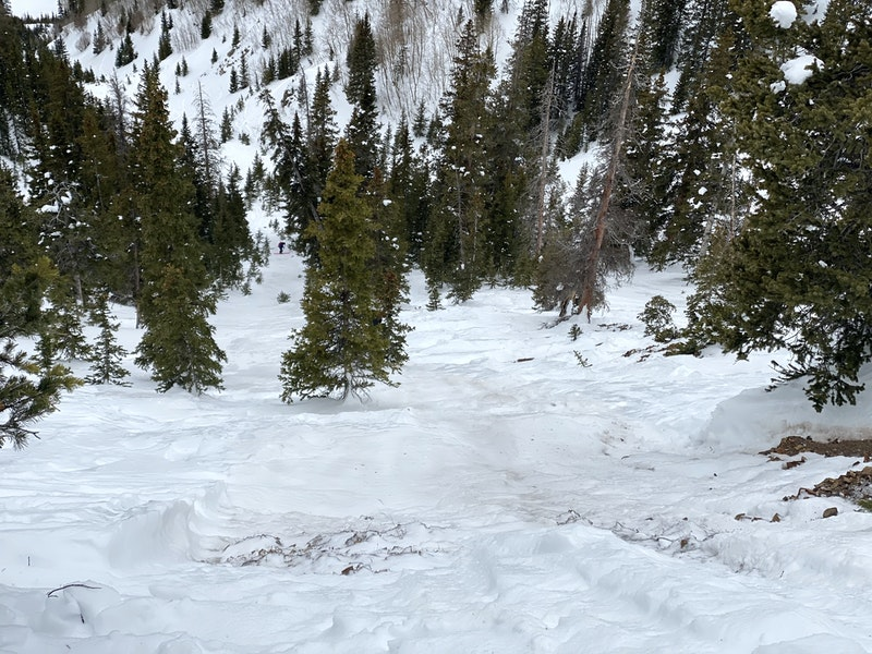 <b>Figure 6:</b> Looking down the slope from the avalanche crown. An investigator is standing near the tree Rider 1 was pinned against (<a href=javascript:void(0); onClick=win=window.open('https://caic-production.imgix.net/usk0789x2fy2kmwrjvkukcxuy3dq?ixlib=php-3.1.0&s=66ed17436b52fecd3da470a940d62291','caic_media','resizable=1,height=820,width=840,scrollbars=yes');win.focus();return false;>see full sized image</a>)