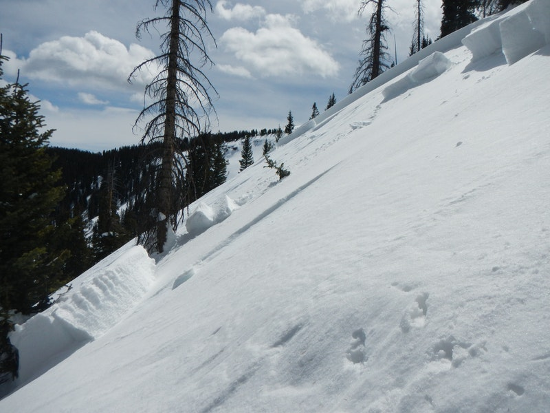 <b>Figure 7:</b> The crown face of the avalanche ranged from 31 to 36 inches deep and was 250 feet wide. It ran approximately 640 vertical feet. (<a href=javascript:void(0); onClick=win=window.open('https://caic-production.imgix.net/voavh79a24dhyfly6r5jafltq9sx?ixlib=php-3.1.0&s=92575c9ddeef659ea9e61474823dbef8','caic_media','resizable=1,height=820,width=840,scrollbars=yes');win.focus();return false;>see full sized image</a>)
