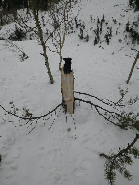 <b>Figure 22:</b> A tree destroyed by the air blast created by the avalanche in Star Mountain A. (<a href=javascript:void(0); onClick=win=window.open('https://caic-production.imgix.net/x8a58q9afphj255dcy575ge2e0s7?ixlib=php-3.1.0&s=f9c2b7527a3d3b596aaa808cc303359d','caic_media','resizable=1,height=820,width=840,scrollbars=yes');win.focus();return false;>see full sized image</a>)
