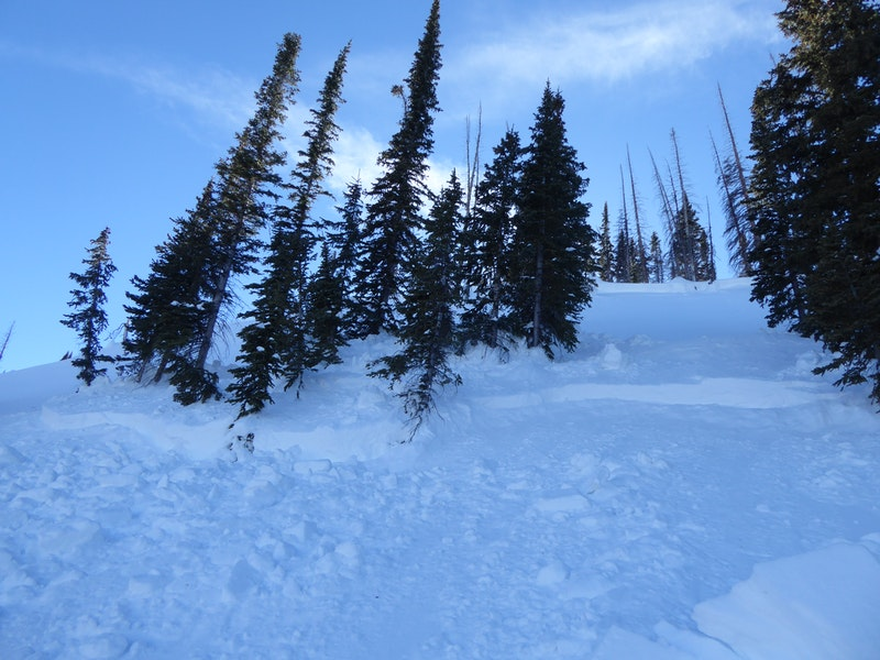 <b>Figure 9:</b> Looking up at a stand of trees near the top of the avalanche. You can see two separate fracture lines along each set of trees in the image. (<a href=javascript:void(0); onClick=win=window.open('https://caic-production.imgix.net/yn35nfmpqcwljrrgr6ihesgfodpa?ixlib=php-3.1.0&s=2f8c9a9676b95679b13fa7caac9db0f2','caic_media','resizable=1,height=820,width=840,scrollbars=yes');win.focus();return false;>see full sized image</a>)