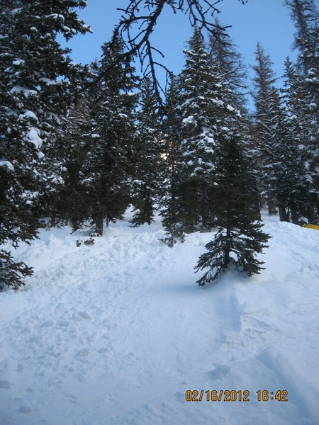 <b>Figure 6:</b> Looking up the avalanche. The avalanche swept Skier 2 through these trees. (<a href=javascript:void(0); onClick=win=window.open('https://caic-production.imgix.net/zyg1ey4ugqdlmq3qpvlzvl3sny4k?ixlib=php-3.1.0&s=f94cb02b0728e4a40f53ca1015c466f4','caic_media','resizable=1,height=820,width=840,scrollbars=yes');win.focus();return false;>see full sized image</a>)